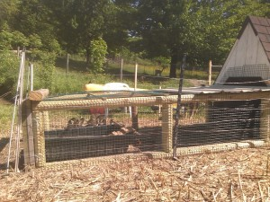 New Duckling Enclosure by Pond