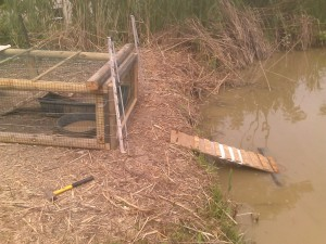 Ramp for Ducklings When Released